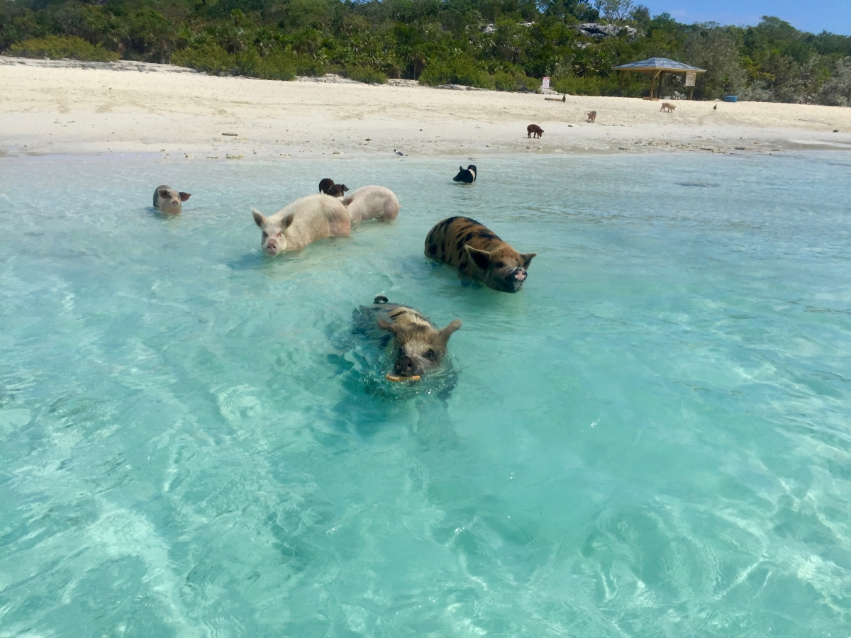 Cheeky Pigs!